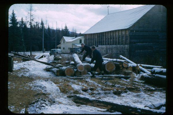 A-1-116-logs at sawmill